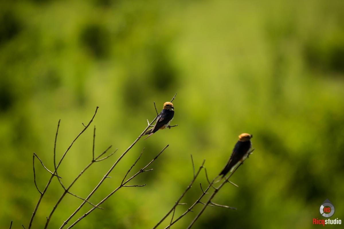 Love birds were here too:)